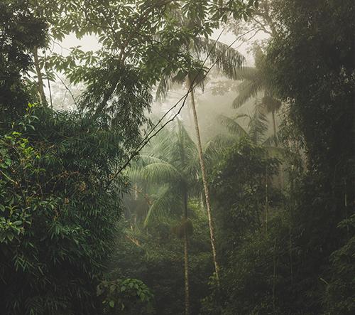 Antonio Schubert fotí krásu a tajemství brazilských pralesů