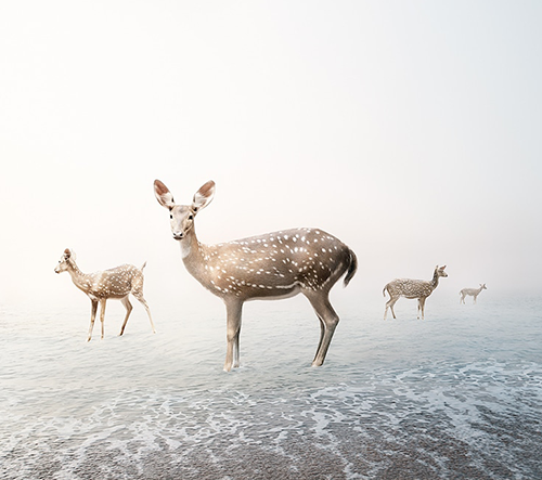 Alice Zilberberg vytváří uklidňující digitální koláže divokých zvířat