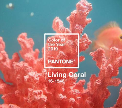 Barvou roku 2019 bude dle Pantone živá koralová barva