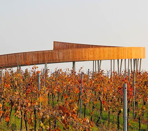 Na jižní Moravě v Kobylí se otevírá vyhlídková Stezka nad vinohrady