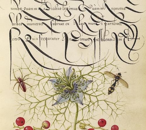 Stáhněte si zdarma dechberoucí kaligrafický manuál z 16. století