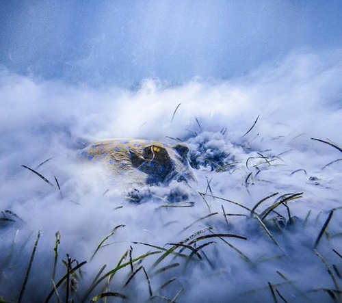 Czech Nature Photo vyhrál snímek ryby snídající u dna moře