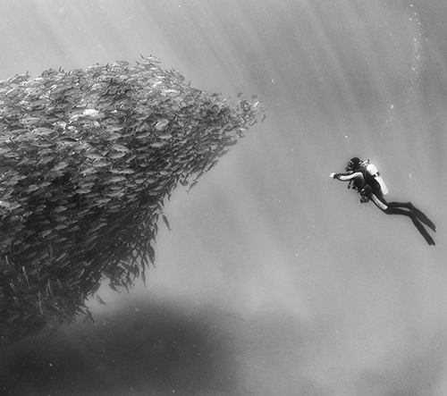Černobílé záběry podmořského života vyzývají na respektování krásy, ale i zranitelnosti oceánů