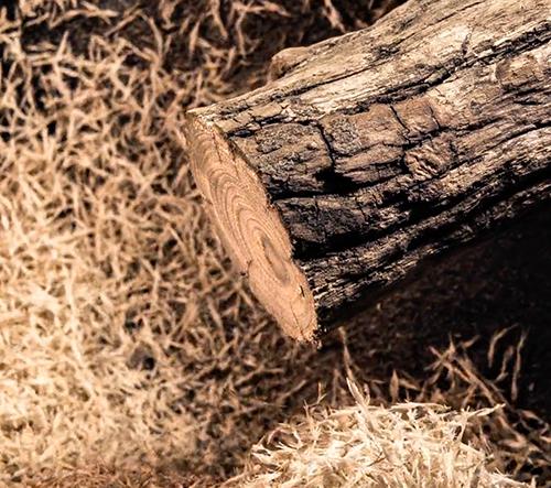 Krátký film zachycující jedinečnou strukturu dřeva od Bretta Foxwella