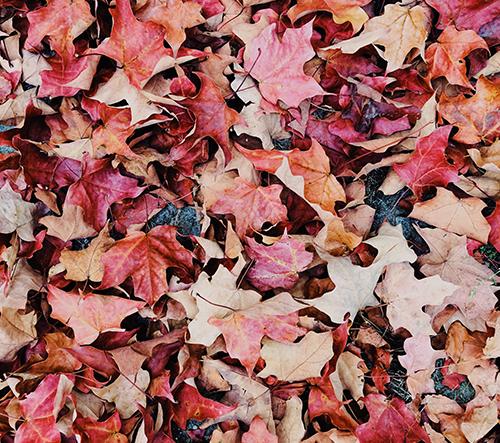 Podzim je období, které především inspiruje umělce