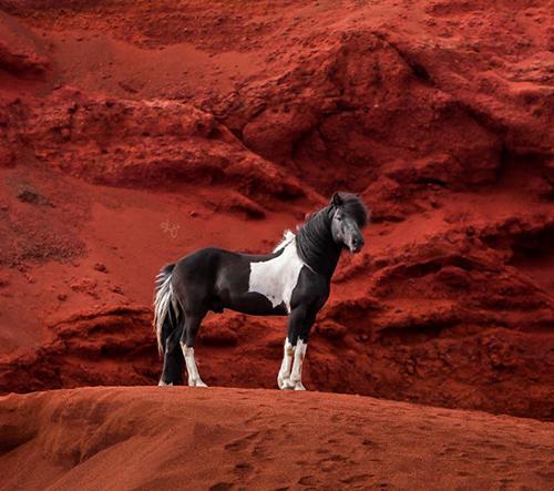 Liga Liepina fotí dechberoucí krásu islandských koní