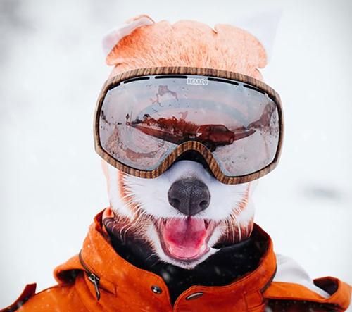 Vypusť své vnitřní zvíře s ultra realistickou lyžařskou zvířecí maskou