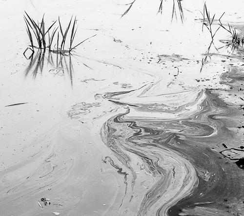 Lee Chee Wai dokumentuje vztah člověka a přírody