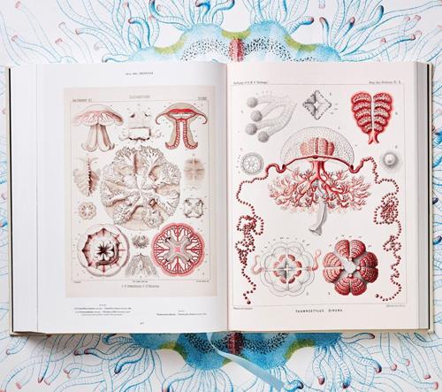 Umění a věda Ernsta Haeckela