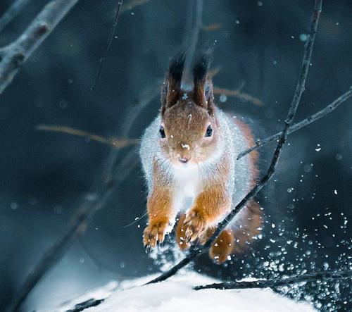 Tato fotografická serie nás zavede do divoké krajiny Finska