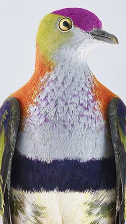 Fotografka Leila Jeffreys zachycuje ptáky mimo jejich tradiční prostředí