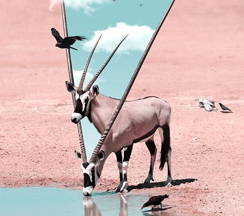 Julien Tabet vytváří abstraktní koláže zvířat