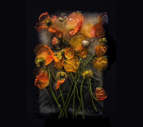 Fotografové Bruce Boyd a Tharien Smith zkoumají krásu zmrzlých rostlin