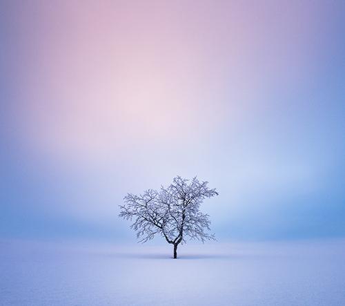Mikko Lagerstedt a krása stromů ve finské krajině