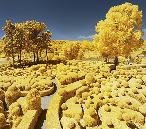 Francouzský fotograf chce ukázat krásu přírody prostřednictvím infračervených fotografií zbarvených dožluta