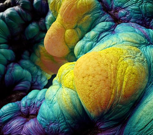 Miki Nemcek abstraktně oživuje transformaci larvy v motýla