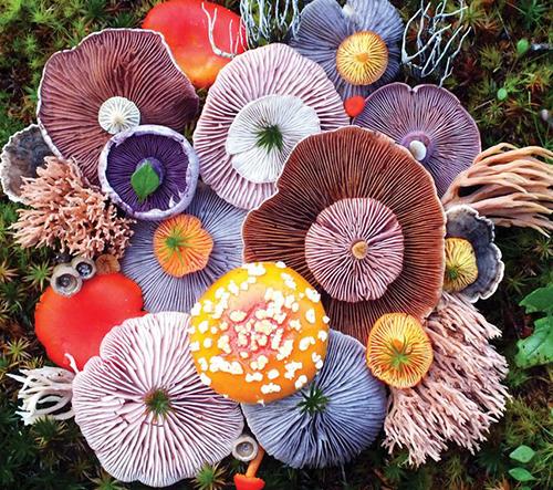 Jill Bliss zachycuje kouzelnou krásu hub