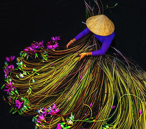 Trung Huy Pham zachytává pestrobarevné momenty sklizně vodních leknínů ve Vietnamu